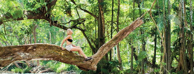 LISA-Study-Abroad-Englisch-Cairns-rainforest-trees-excursion-australia